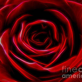 BigCity Images - Electric Red Rose