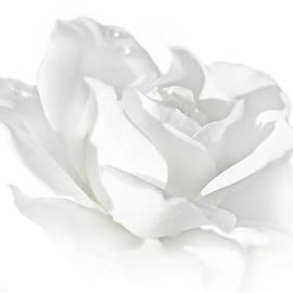 Jennie Marie Schell - Elegance White Rose Flower