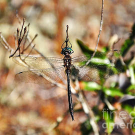 Al Powell Photography USA - Elegant Emerald