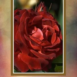 Joy Watson - Elegant Rose