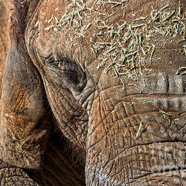 Miroslava Jurcik - Elephant never forgets