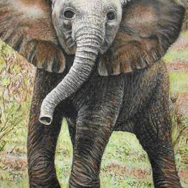 Wendy Koehrsen - Elephant Side Step