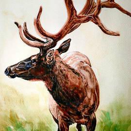Audrey Van Tassell - Elk