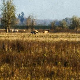 Belinda Greb - Elk in a Field