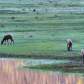 Dan Sproul - Elk Reflection
