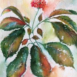 Bette Orr - Elusive Ginseng