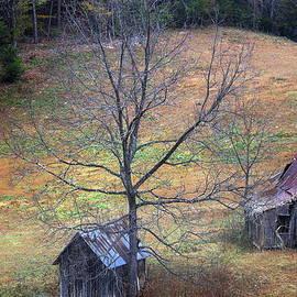 Faith Williams - Empty Nest