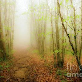 Dan Carmichael - Enchanted Forests of the Blue Ridge II