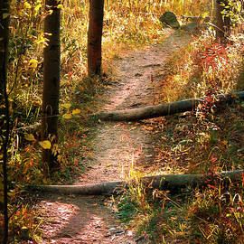 Roselynne Broussard - Enchanted Path