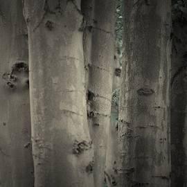 The Art Of Marilyn Ridoutt-Greene - Enchanted Trees
