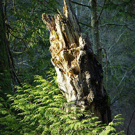 Marilyn Wilson - Enchanted Woods