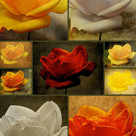 Mother Nature - Enigma Of The Yellow Rose Collage