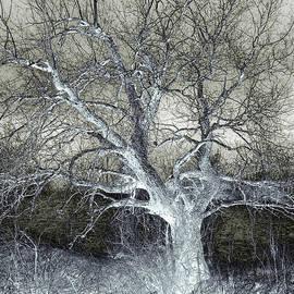 Miss Dawn - Enigmatic Tree Of Light