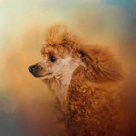 Jai Johnson - Enjoying The Breeze - Apricot Poodle