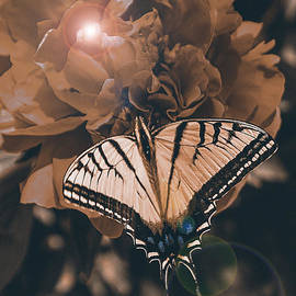 Janice Rae Pariza - Enlightened Butterfly
