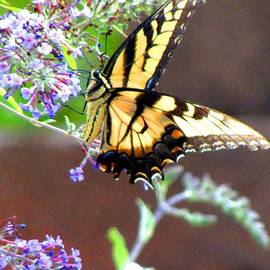 Gardening Perfection - Enraptured Butterfly