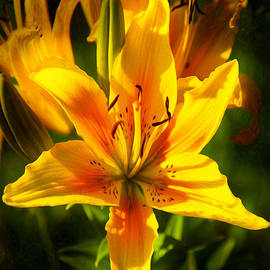 Omaste Witkowski - Enticing Bloom of Yellow And Orange Lilies Garden Art by Omaste