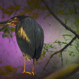 Dick Hudson - Eola Green Heron