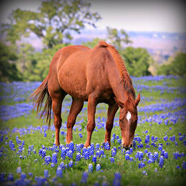 Stephen Stookey - Equine Bluebonnets