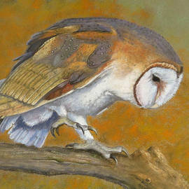 Marcus Moller - Eros the Barn Owl