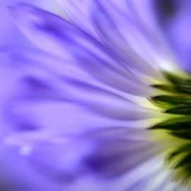 Deb Halloran - Floral Essence