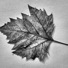 Tom Druin - Essence...leaf Exposer Merge