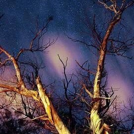Petros Yiannakas - Eucalyptus Night Tree