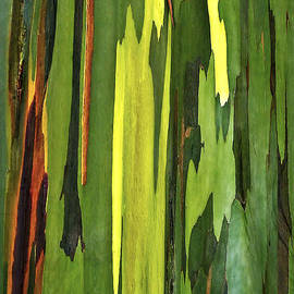 Marcia Colelli - Eucalyptus Tree