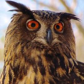 Cynthia Guinn - Eurasian Eagle Owl