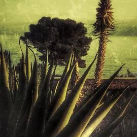 Julian Darcy - Evening in a mediterranean garden