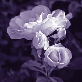 Jennie Marie Schell - Evening Light Lavender Roses in the Garden