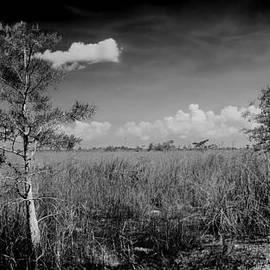 Rudy Umans - Everglades 1909BW