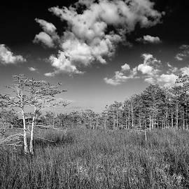 Rudy Umans - Everglades 9574BW