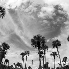 Joey Waves - Everglades Palms