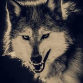 Ernie Echols - Evil Wolf