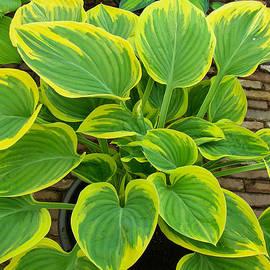 Robert Ford - Exuberant Tropical Indoor Leafy Plant at Keukenhof Flower show Lisse Netherlands