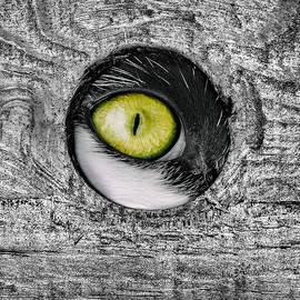 Adrian Campfield - Eye Hole