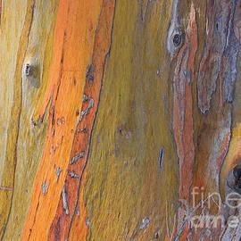 Kris Hiemstra - Eye of A Eucalyptus