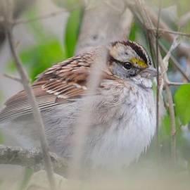 Maria Urso  - Eye on the Sparrow