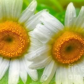 Peggy  Franz - Eye See Daisy
