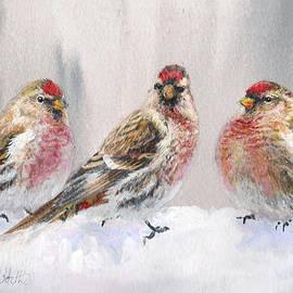 Karen Whitworth - Eyeing The Feeder 2 Alaskan Redpolls In Winter