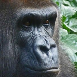 Margaret Saheed - Eyes Of The Gorilla