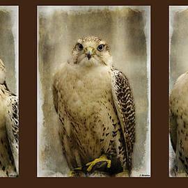 Jordan Blackstone - Faces of Strength - Triptych Art