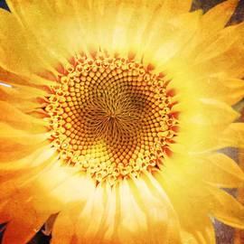 Beth Williams - Facing the Sun