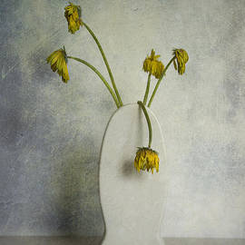Hans Janssen - Withered Flowers