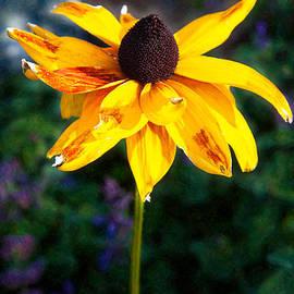 Omaste Witkowski - Fading Golden Beauty Garden Art by Omaste Witkowski