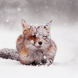 Roeselien Raimond - Fairytale Fox II