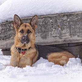 Eleanor Abramson - Faithful German Shepherd