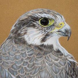 Katja Sauer - Falcon