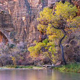 Pierre Leclerc Photography - Fall at Sinawava Temple Zion Utah